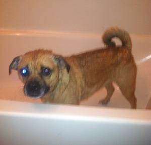 sheba in tub